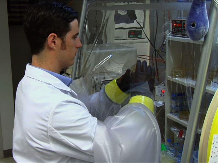 Kultivierung und Pflege<em&gt; Clostridium difficile</em&gt; In einer anaeroben Umgebung