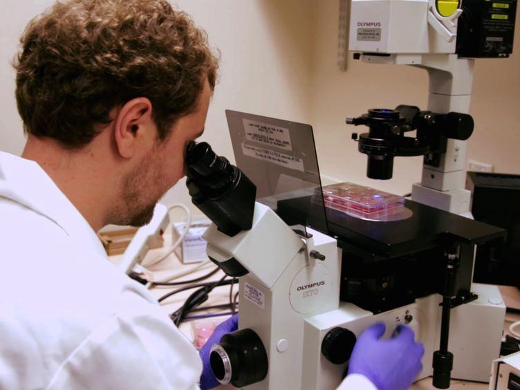 Rettung von rekombinanten Newcastle Disease Virus aus cDNA