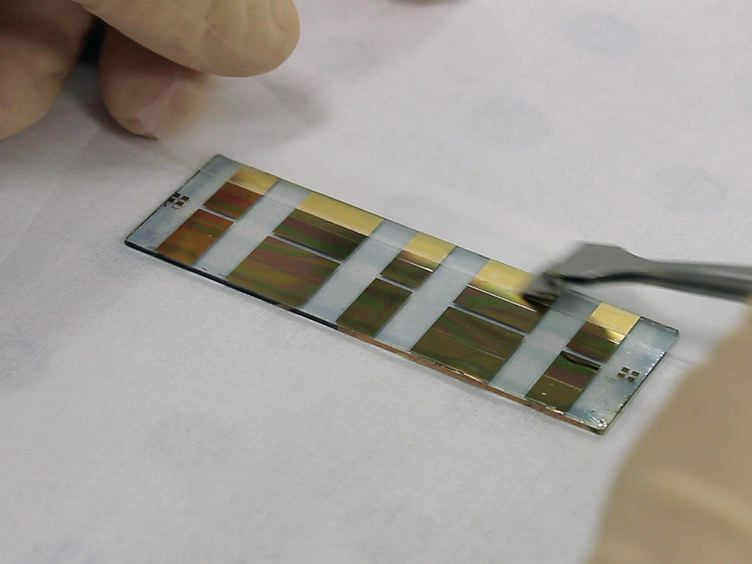 Sensing of Barrier Tissue Disruption with an Organic Electrochemical Transistor