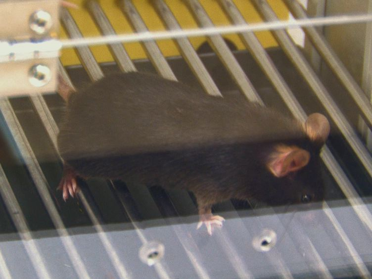 Trace Fear Conditioning in Mice