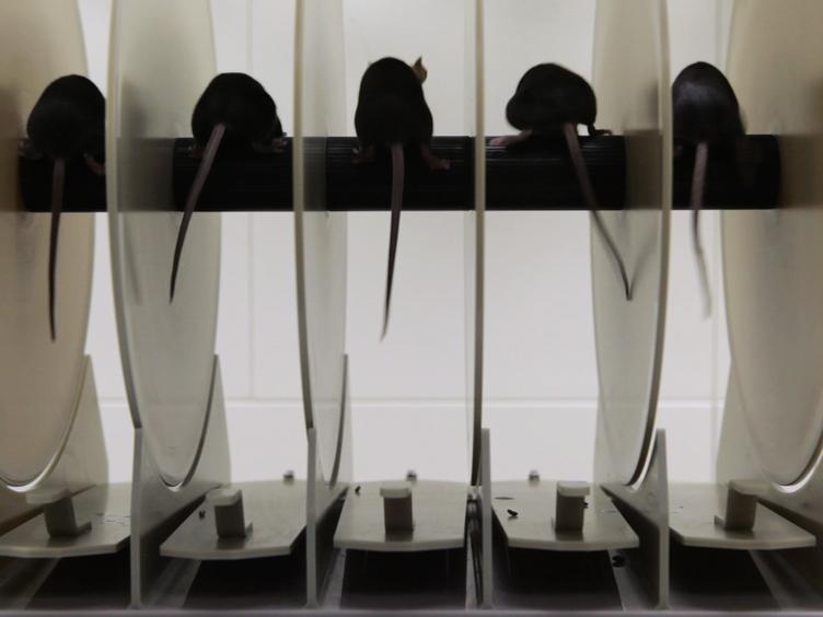 Assessing Functional Performance in the <em>Mdx</em> Mouse Model