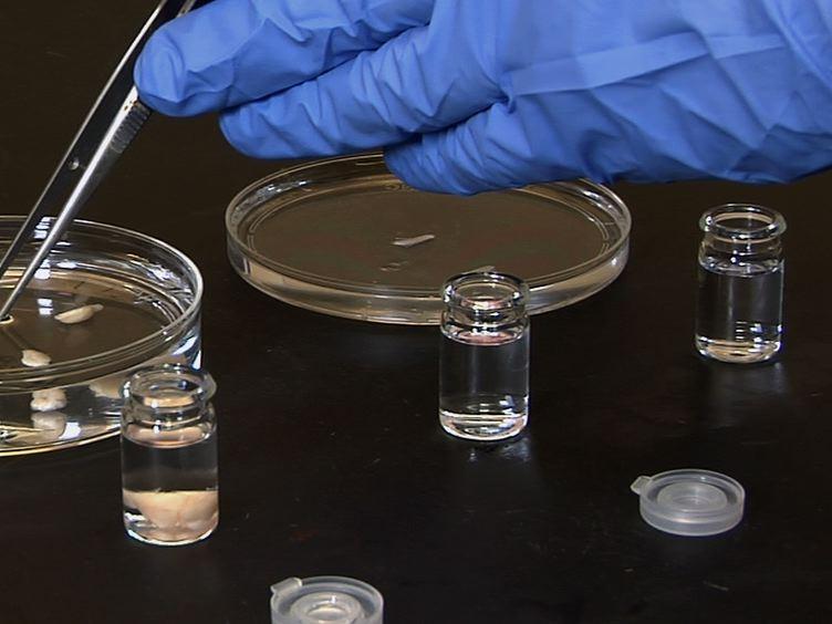 Imagem Limpa Sistemas Biológicos intactas em um nível celular por 3DISCO