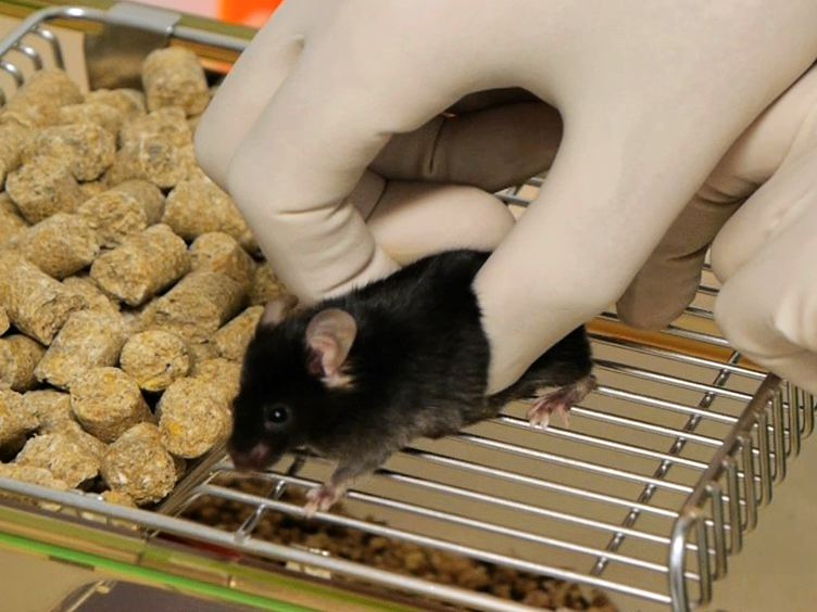 A Modified Method for Heterotopic Mouse Heart Transplantion