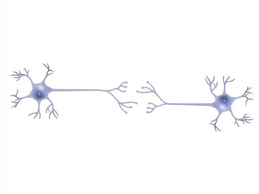 发育神经生物学导论