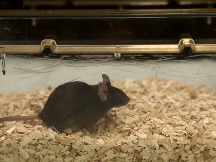 Simple and Computer-assisted Olfactory Testing for Mice