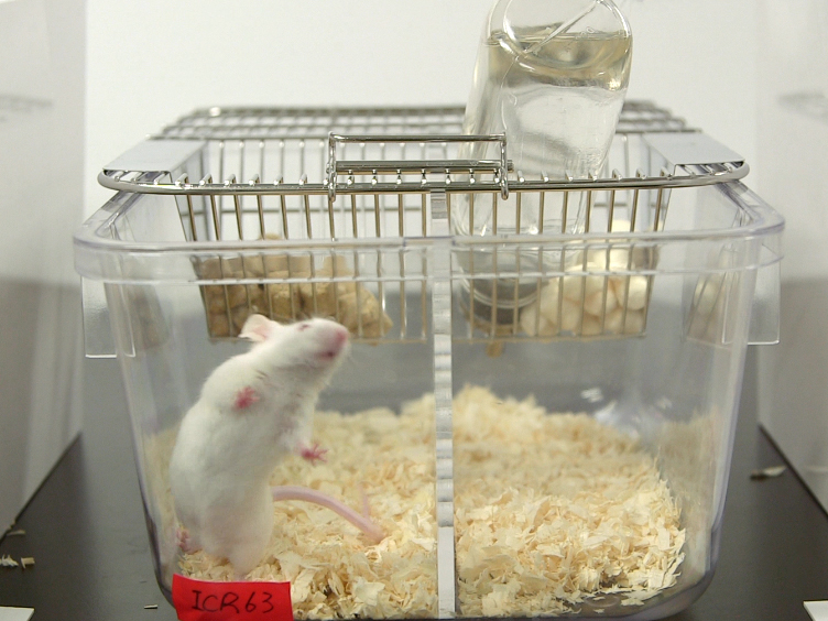 A Mouse Model of Subchronic and Mild Social Defeat Stress for Understanding Stress-induced Behavioral and Physiological Deficits