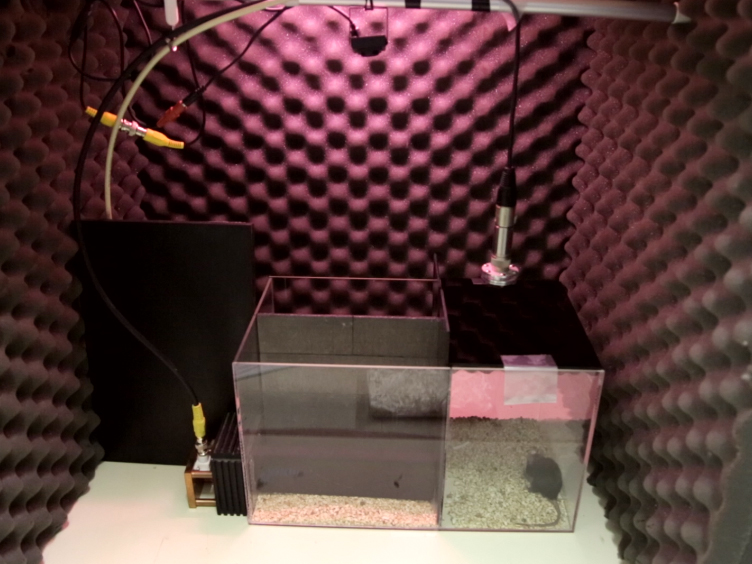 Determining Ultrasonic Vocalization Preferences in Mice using a Two-choice Playback Test