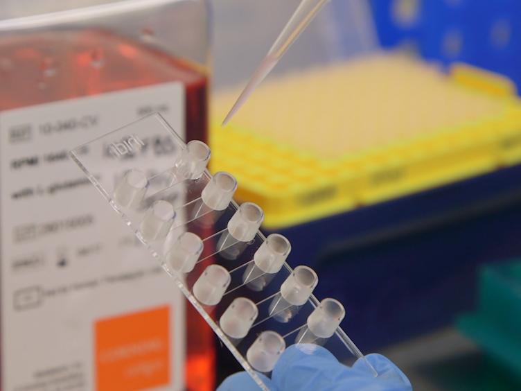 Test der Haftung unter Scherspannung für das Studium der T-Lymphozyten-Adhäsions-Molekül-Wechselwirkungen
