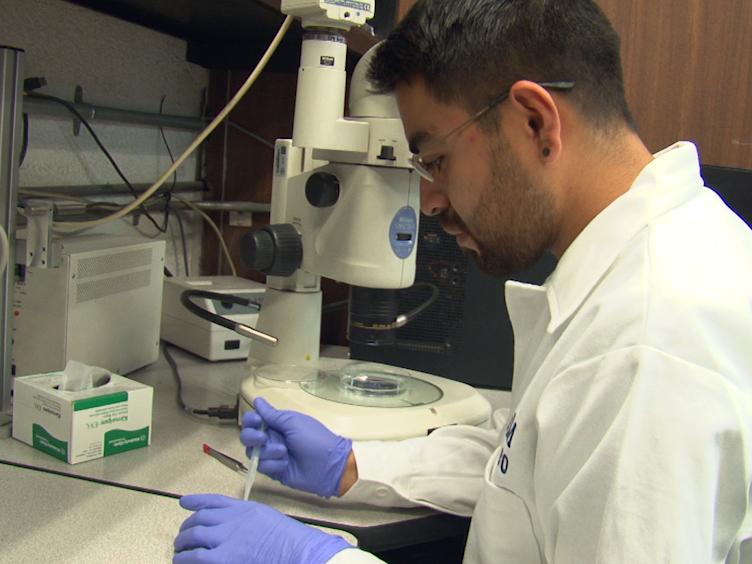 Affinity Labeling Detection of Endogenous Receptors from Zebrafish Embryos
