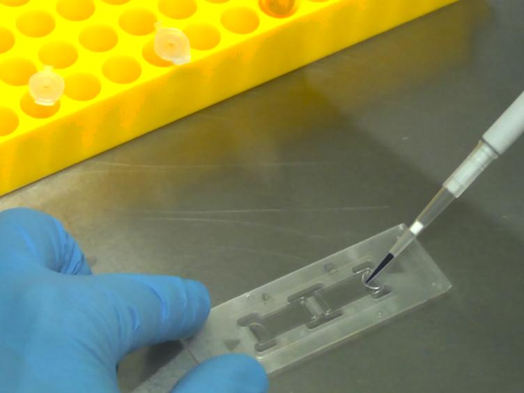 قياس ل<em&gt; في المختبر</em&gt; التكامل آخر من HIV-1 Preintegration مجمعات