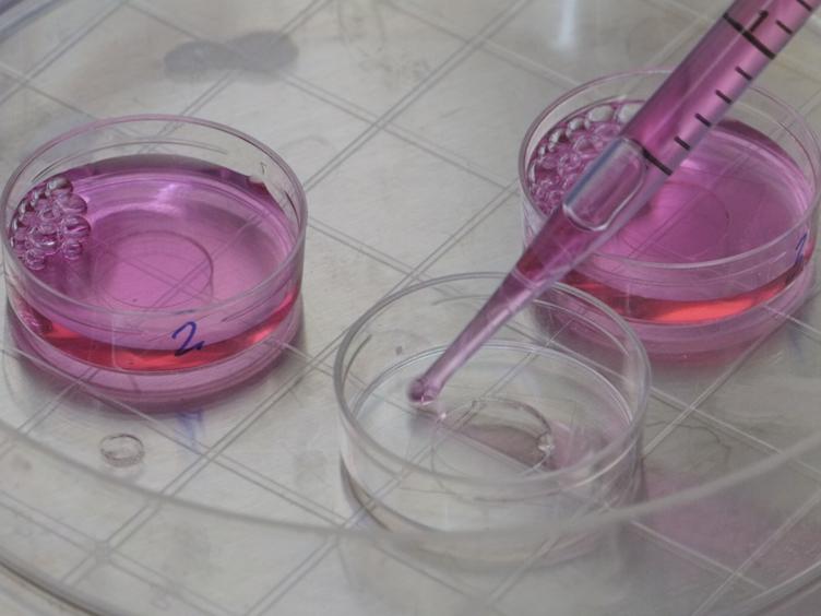 Sıvı Kristal Nanopartikül Carrier bir Hidrofobik Kargo Encapsulated, hedeflenen Plazma Zarı Teslimat