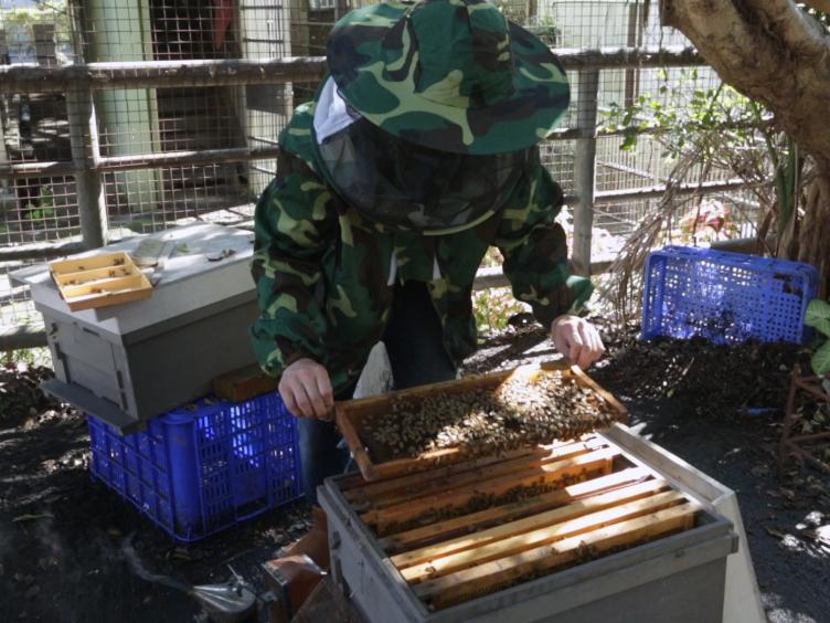 Évaluation de l'incidence des produits chimiques sur l'environnement Miel de développement Abeille de l'individu à la colonie Niveau