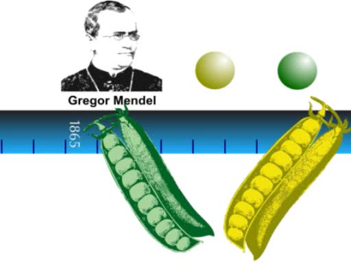 An Overview of Genetic Analysis