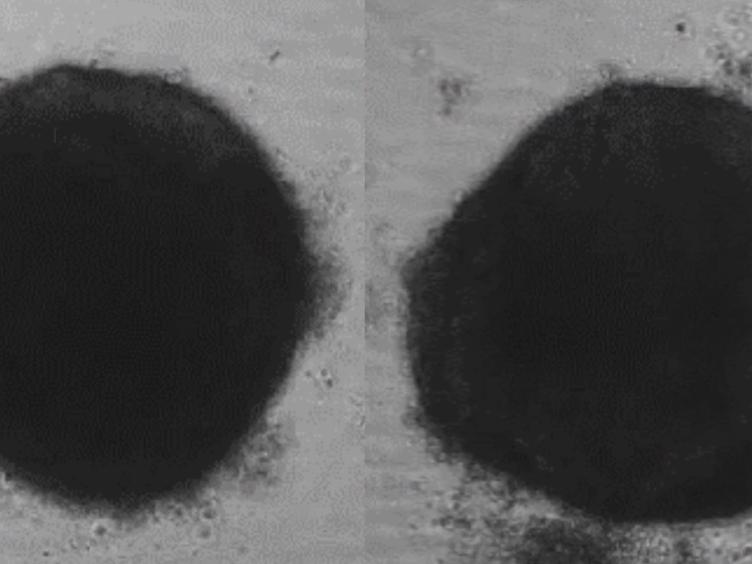 Creation of Cardiac Tissue Exhibiting Mechanical Integration of Spheroids Using 3D Bioprinting