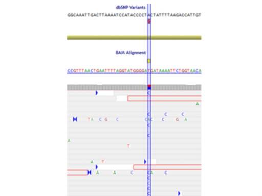 Génotypage SNP