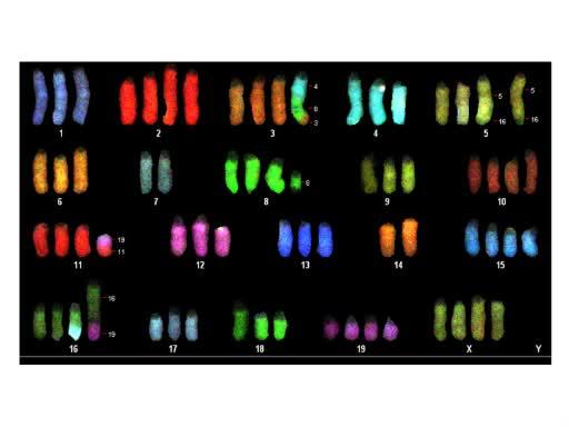 細胞遺伝学