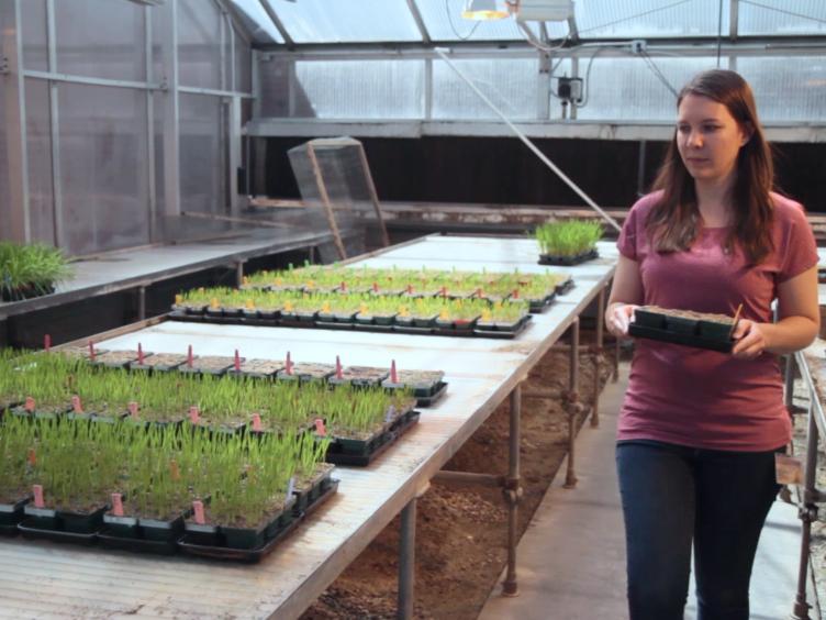 الأمثل والتحليل المقارن لطرق التخصيب الحمض النووي النباتي أورغانيلار مناسبة للجيل القادم التسلسل