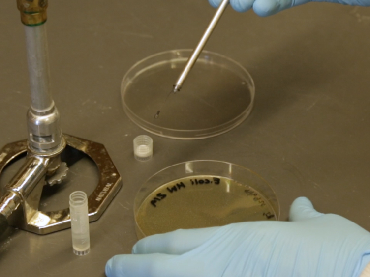 A Method to Test the Efficacy of Handwashing for the Removal of Emerging Infectious Pathogens