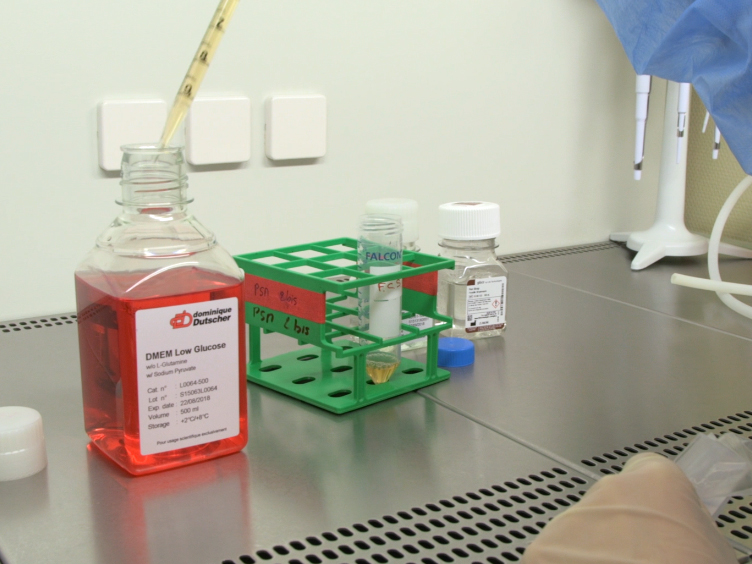 Medição da absorção de glicose e resposta à estimulação da insulina em<em&gt; In Vitro</em&gt; Myotubes primários humanos cultivados