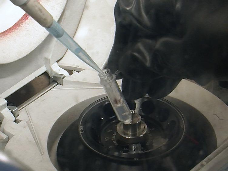 Protein Film infraröd elektrokemi visat för studie av H<sub>2</sub> Oxidation av en [NiFe] Hydrogenase