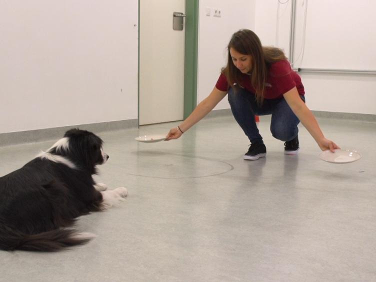 皮带的另一端: 分析主人与宠物狗互动的实验测试