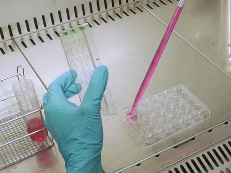 Live Imaging följt av enstaka Cell spårning Monitor cellbiologi och härstamning progressionen av flera neurala populationer