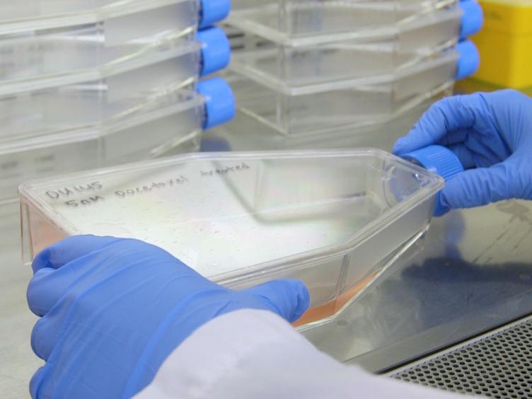 توليد نماذج خلية سرطان البروستاتا لمقاومة دوسيتاكسيل عامل مكافحة الانقسامية
