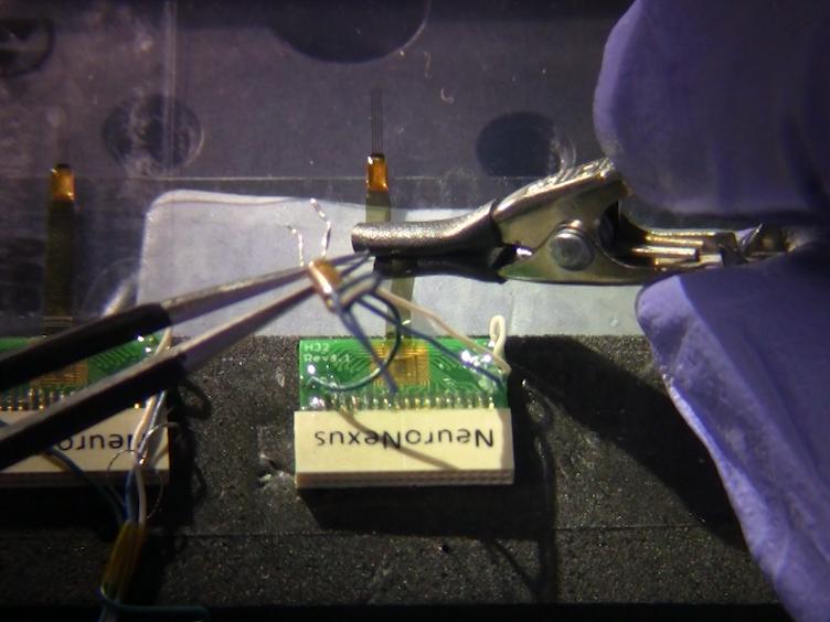 Implantation von chronischen Silicon Sonden und Aufzeichnung der Hippocampal Platzzellen in eine angereicherte Laufband-Vorrichtung