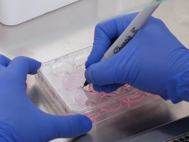Using the Dot Assay to Analyze Migration of Cell Sheets