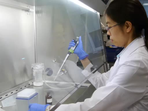 Annexin V and Propidium Iodide Labeling