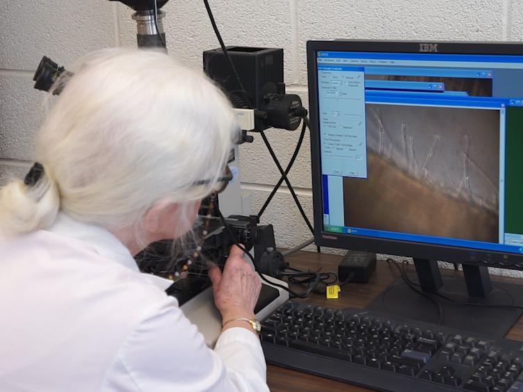Overholdelse af bakterier til at plante flader målt i laboratoriet