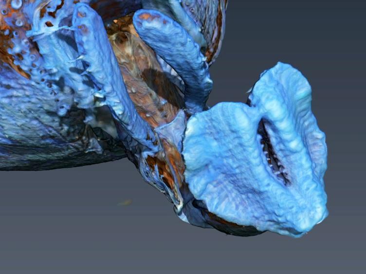 蛍光灯、摂取昆虫における流体吸収能力を決定するための磁気ナノ粒子