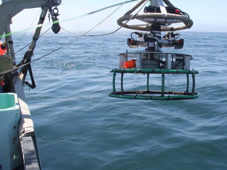 Development of New Methods for Quantifying Fish Density Using Underwater Stereo-video Tools