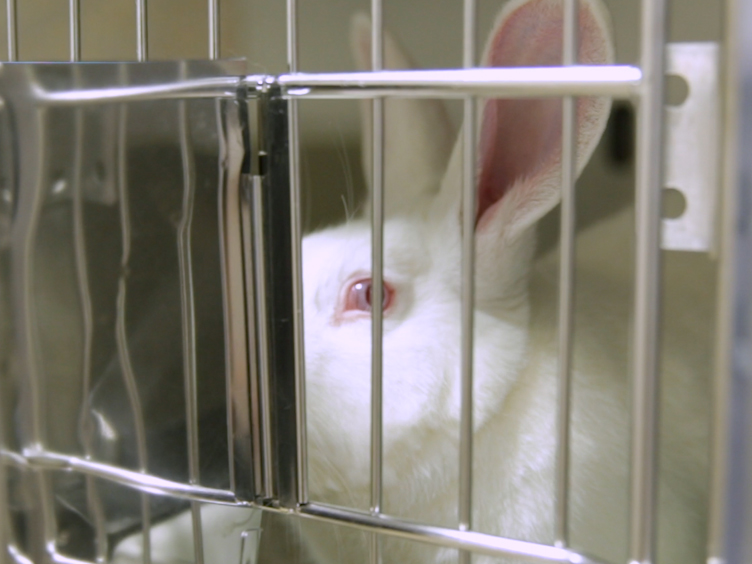 An Experimental Model of Diet-Induced Metabolic Syndrome in Rabbit: Methodological Considerations, Development, and Assessment