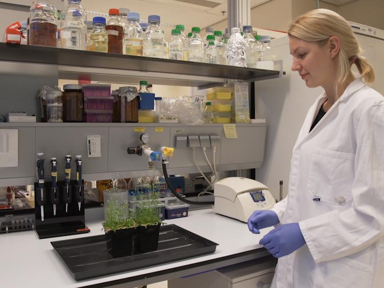 Generating Transgenic Plants with Single-copy Insertions Using BIBAC-GW Binary Vector