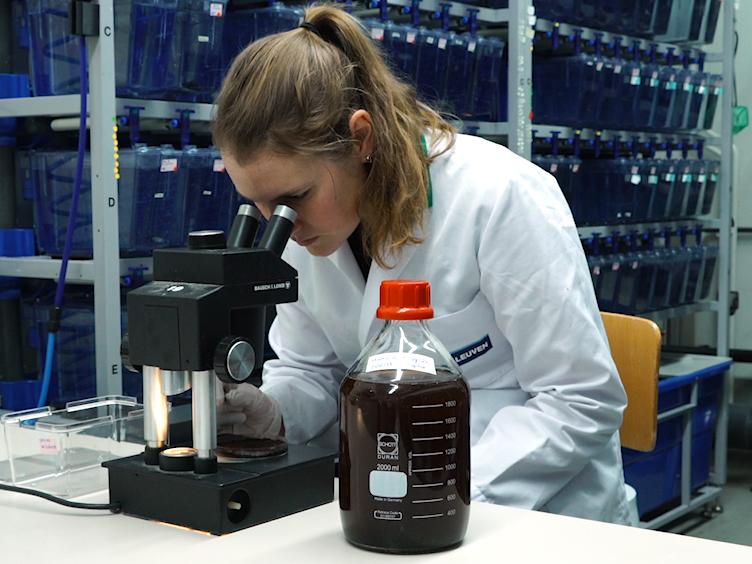 Protocol for Acute and Chronic Ecotoxicity Testing of the Turquoise Killifish <em>Nothobranchius furzeri</em>