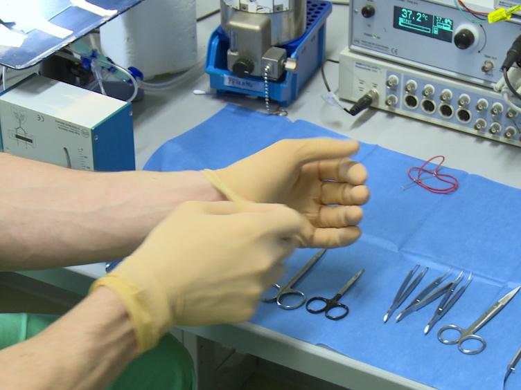 Een gesloten-borst-Model voor het opwekken van transversale aorta vernauwing in muizen