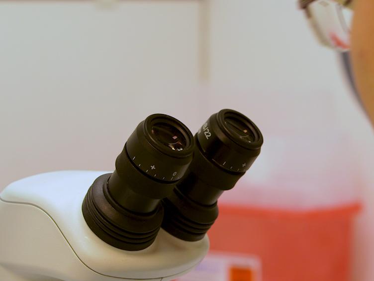 En <em>Drosophila In Vivo</em> skade Model til at studere Neuroregeneration i perifere og centrale nervesystem