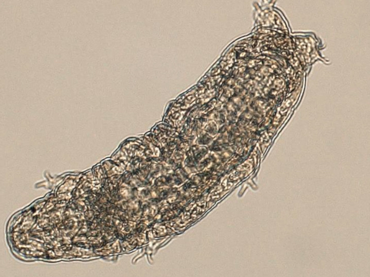 Ultralow Input Genome Sequencing Library Preparation from a Single Tardigrade Specimen