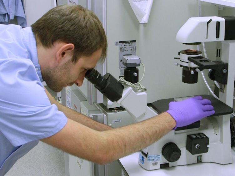 Semi-automatische productie van Hepatocyte als cellen uit pluripotente stamcellen