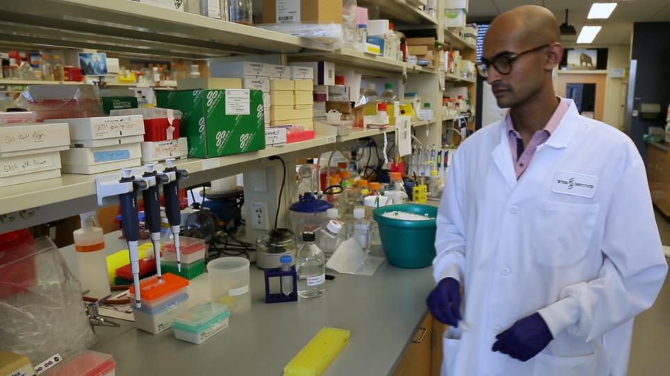 CRISPR Guide RNA Cloning for Mammalian Systems