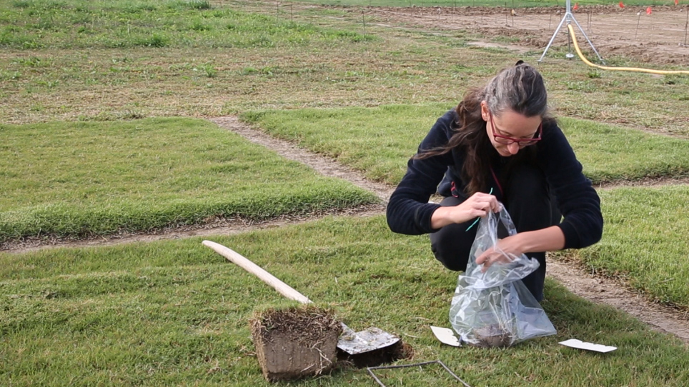 Measuring Stolons and Rhizomes of Turfgrasses Using a Digital Image Analysis System