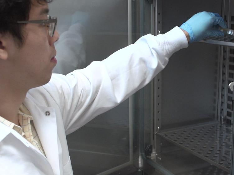 Modifiera baculoviridae uttryck vektorer att producera utsöndras växtproteiner i insekt celler