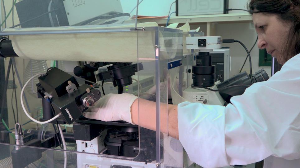ניתוח של סרטן תאים הפלישה ושל סמים אנטי גרורתי הקרנת באמצעות מערך הידרוג מיקרו-תא (HMCA)-המבוסס על צלחות