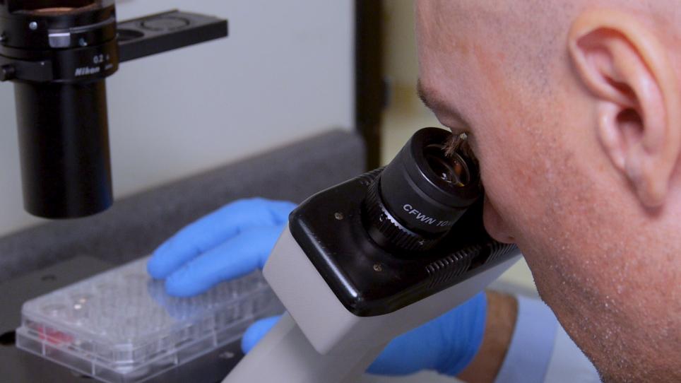 Um ensaio de potência em tempo real para células T do receptor de antígeno quimérico visando células cancerosas sólidas e hematológicas