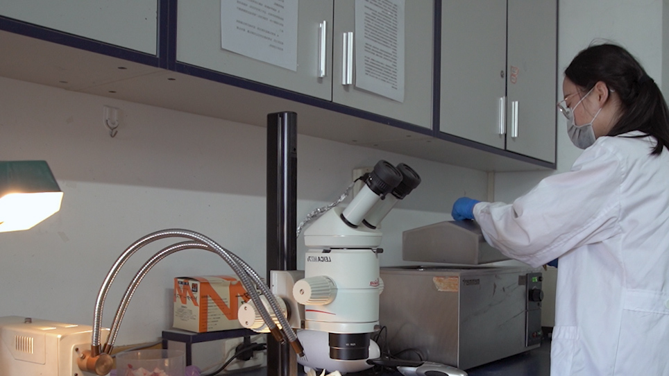 Bruk av in vivo single-fiber Recording og intakt rygg rot Ganglion med vedlagt ischias nerven til å undersøke mekanismen for Lednings feil