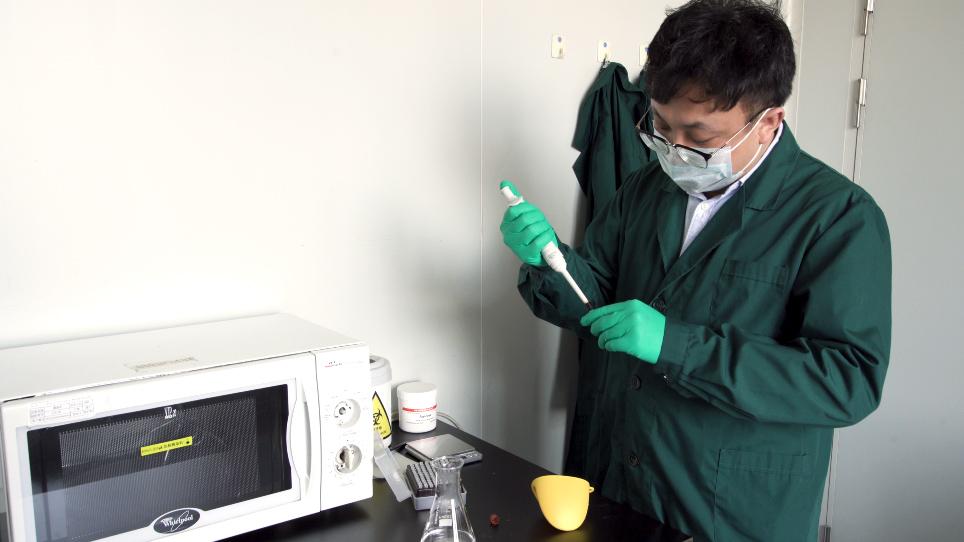 تقييم تفاعل البلمره المتسلسل المتداخل العالمي للكشف عن فيروسات الليسايسيس