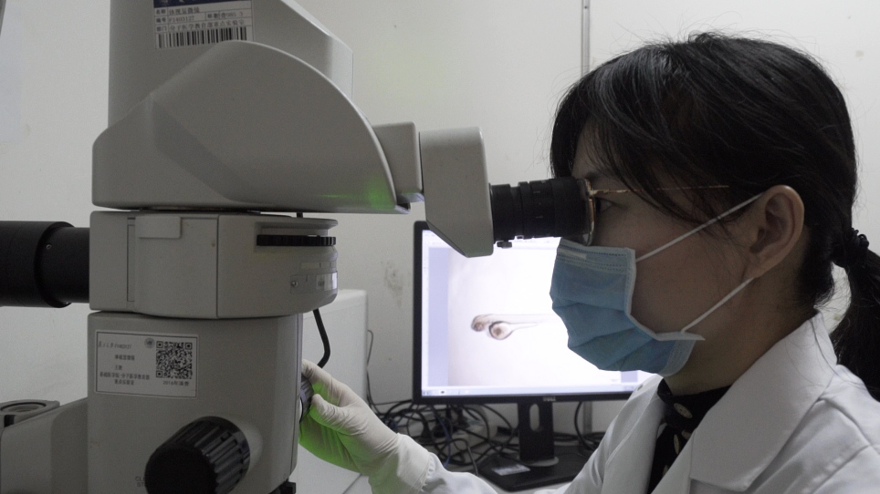 Patient-derived Heterogeneous Xenograft Model of Pancreatic Cancer Using Zebrafish Larvae as Hosts for Comparative Drug Assessment