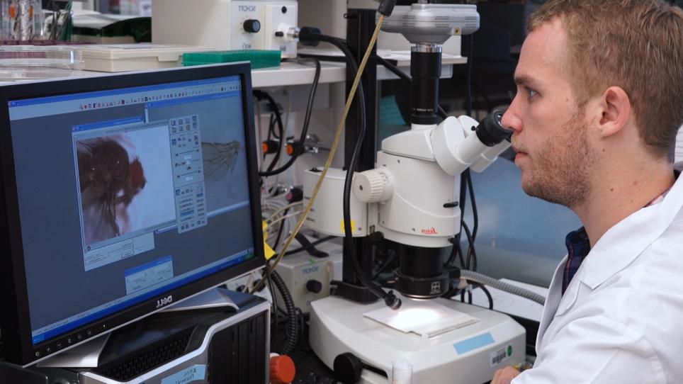 In Vivo Funktionelle Studie von krankheitsassoziierten seltenen menschlichen Varianten mit <em>Drosophila</em>