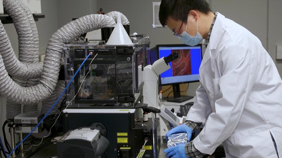 אינטרטל הדמיה של לימפוציטים תוך-אפיתל במעי קטן מוריין